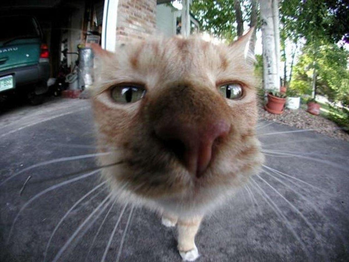 Name:  Cat_Fisheye.jpg Views: 2689 Size:  124.2 KB