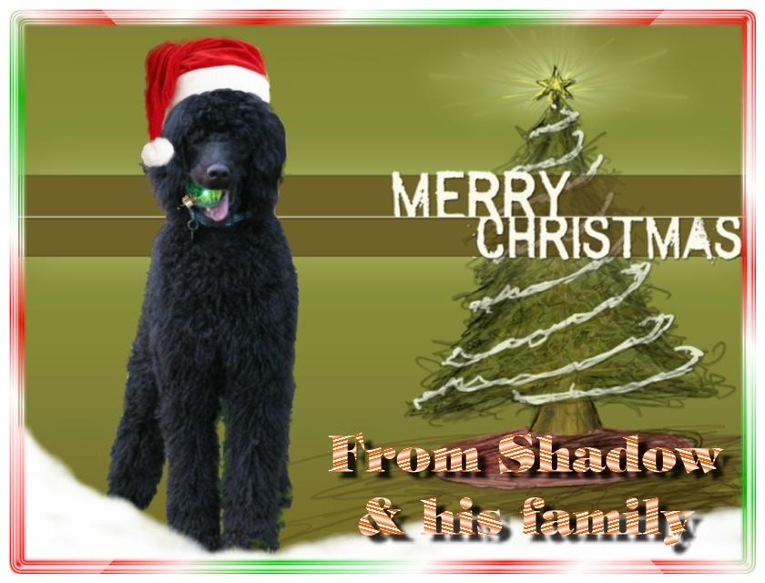 Name:  shadow-christmas-card-3.jpg Views: 6112 Size:  291.5 KB